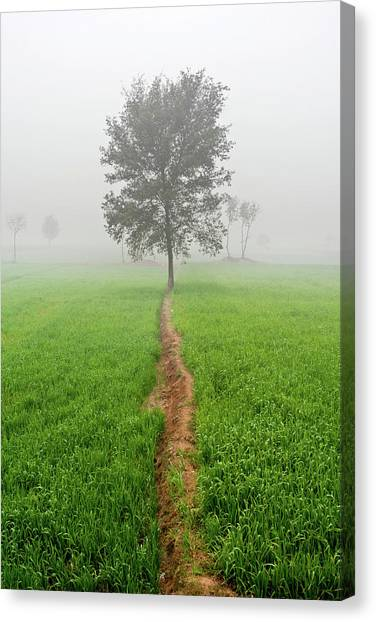 The Walking Tree Canvas Print