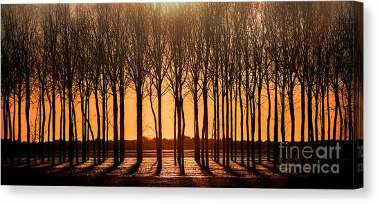 The Walnut Grove Canvas Print