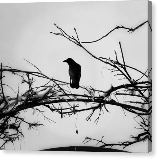 The Watchman Canvas Print by Vail Joy