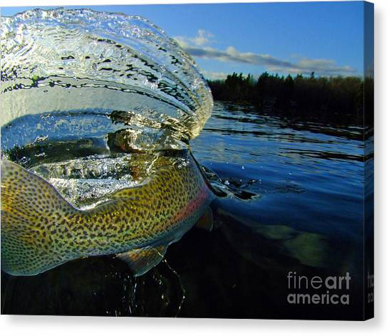 The Way Of The Trout Canvas Print by Brian Pelkey