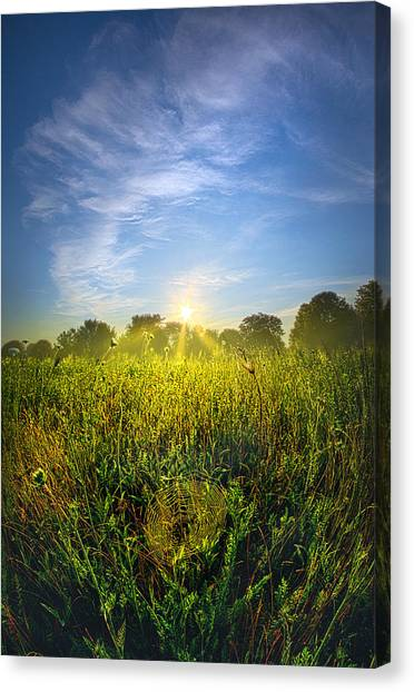 Spider Web Canvas Print - The Web by Phil Koch
