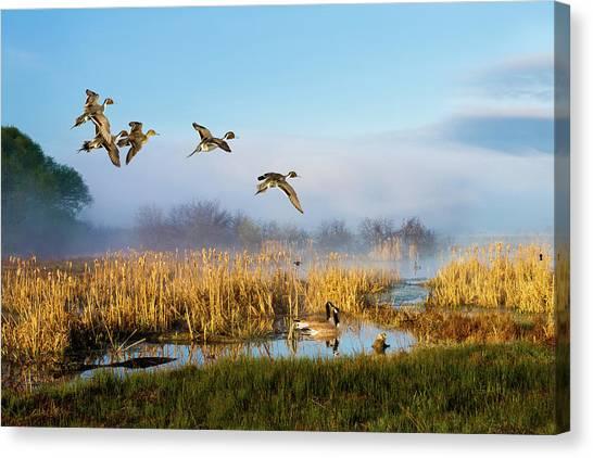 The Wetlands Crop Canvas Print