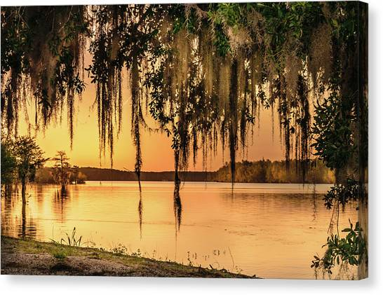 Atchafalaya Basin Canvas Print - The Wetlands by Lisa Ancona Miller