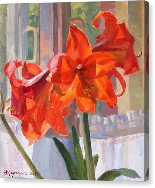 Amaryllis Canvas Print - The Window by Victoria Kharchenko