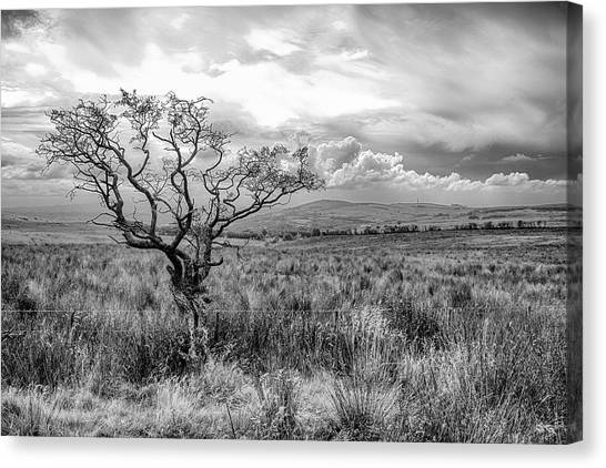 The Windswept Tree Canvas Print