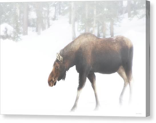 The Winter Moose Canvas Print