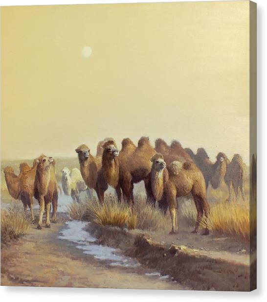 Camels Canvas Print - The Winter Of Desert by Chen Baoyi
