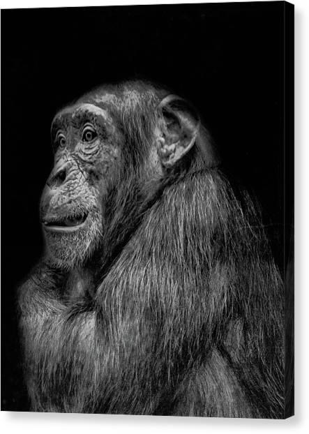 Chimpanzee Canvas Print - The Wise Chimp by Martin Newman