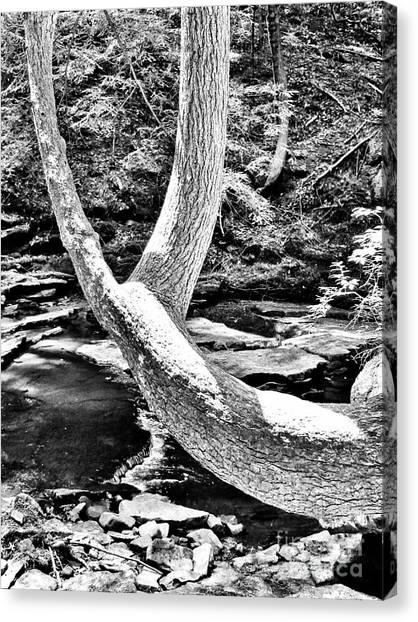 The Wishbone Tree Bw Canvas Print