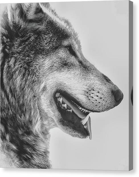 Arctic Wolf Canvas Print - The Wolf by Martin Newman