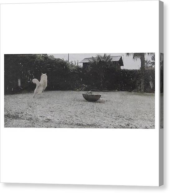 Home Runs Canvas Print - •the Wolves-bon Iver  #ice by Gianluca Tosques