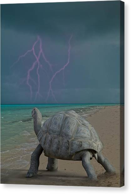 Tortoises Canvas Print - The Wonders Of Mother Nature by Betsy Knapp
