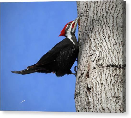 The Woodchipper Canvas Print