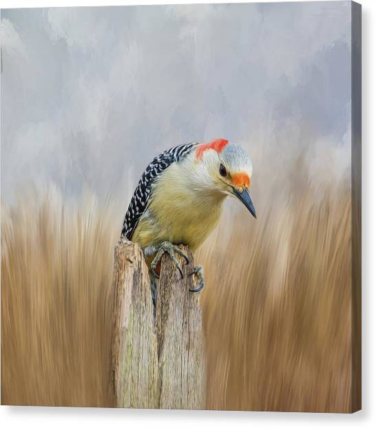 The Woodpecker Canvas Print