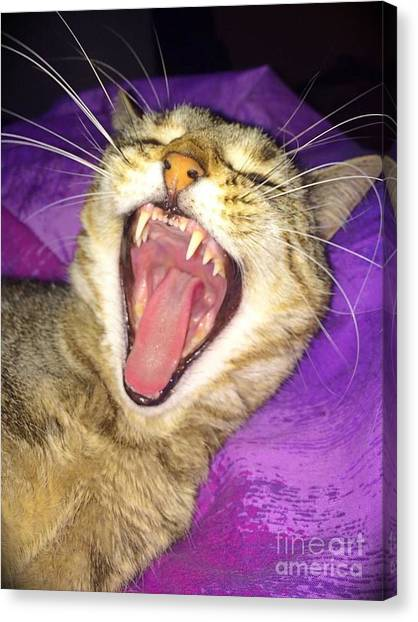 The Yawn Canvas Print