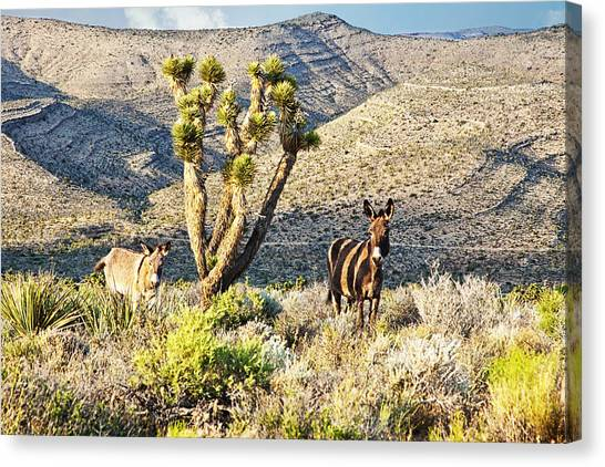 The Zebra Burro Canvas Print
