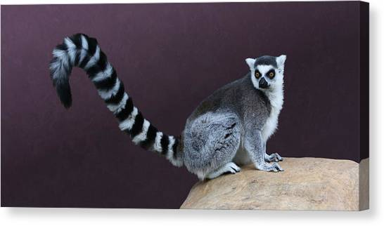 Thereby Hangs A Tail Canvas Print