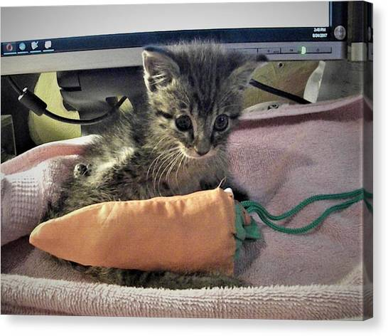 There's A Cat On My Desk Canvas Print