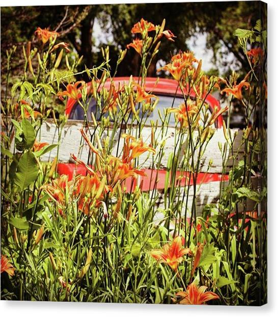 Volkswagen Canvas Print - There's An Orange Bug In The Orange by Heidi Hermes