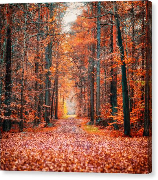 Thetford Forest Canvas Print