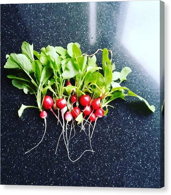 Canvas Print - They Keep Coming #harvest #radish by Vegetable Garden