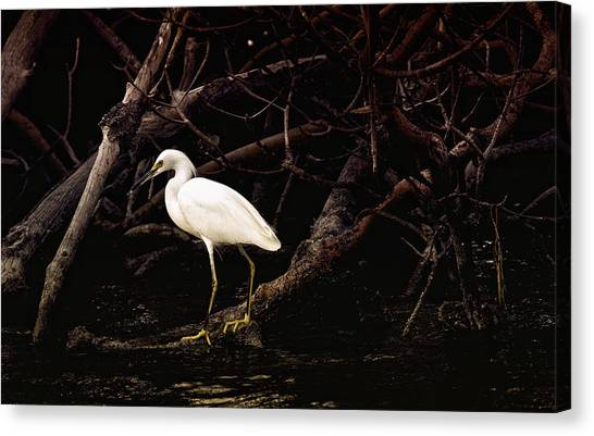 Thicket Canvas Print by Joel P Black
