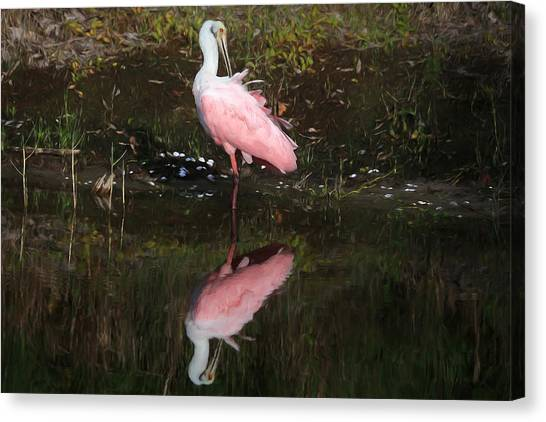 Spoonbills Canvas Print - Think Pink by Donna Kennedy