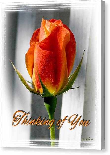 Thinking Of You, Rose Canvas Print