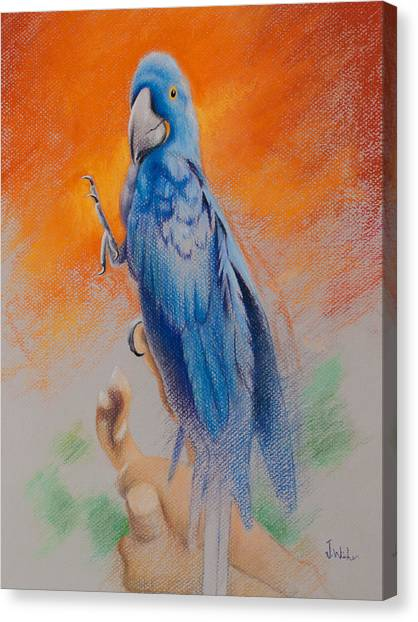 This Bird Had Flown Canvas Print