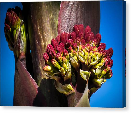 This Bud's For You Canvas Print