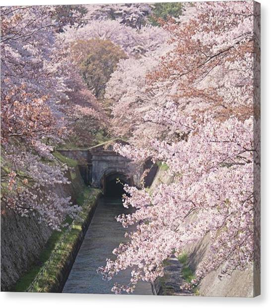 Japanese Canvas Print - This Extraordinary Scene Happens Each by Margaret Goodwin