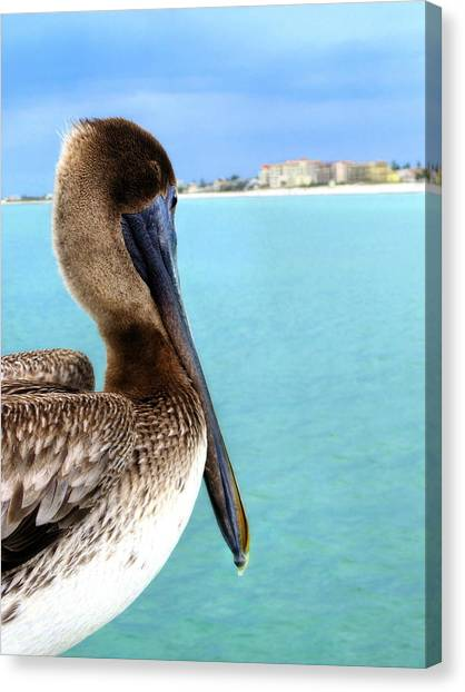 This Is My Town - Pelican At Clearwater Beach Florida  Canvas Print
