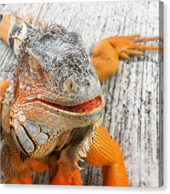 Iguanas Canvas Print - This Is What Happy Looks Like. Big by Claudia Miller