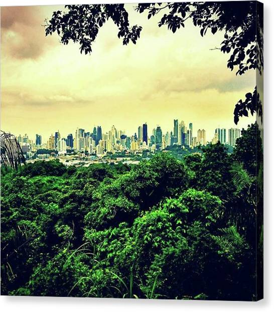 Rainforests Canvas Print - This Is Where Dense, Monkey-inhabited by Sascha Schultz