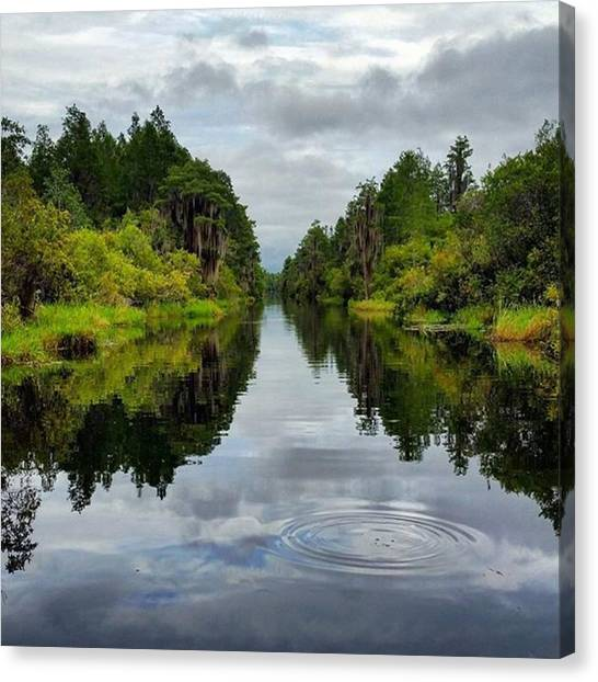 Okefenokee Canvas Print - This Isn't A Very Balanced Shot But I by Karen Breeze