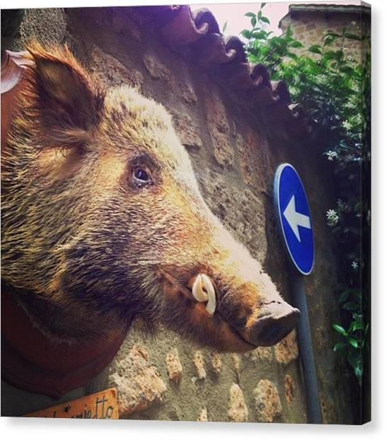 Hogs Canvas Print - Alleyway In Orvietto.  by Jacci Freimond Rudling