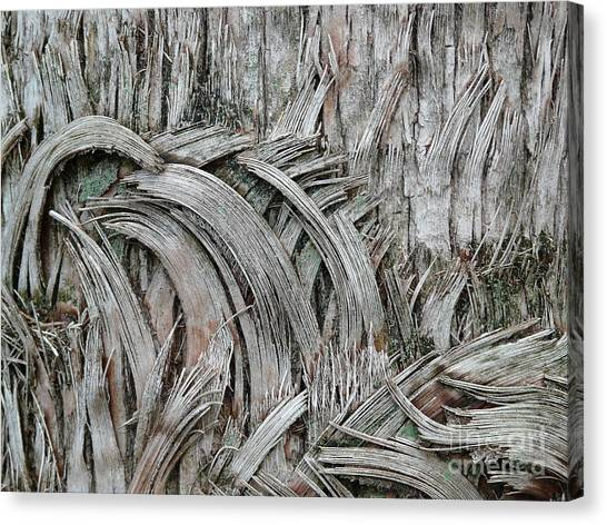 This Way 'n That Canvas Print by Donna McLarty
