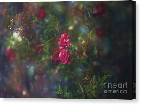 Thorns And Roses II Canvas Print