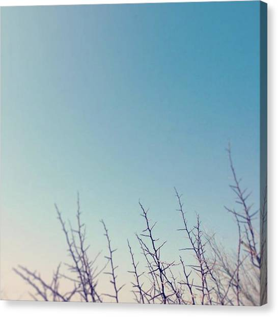 Big Sky Canvas Print - Thorns Against The Sky by Jacci Freimond Rudling