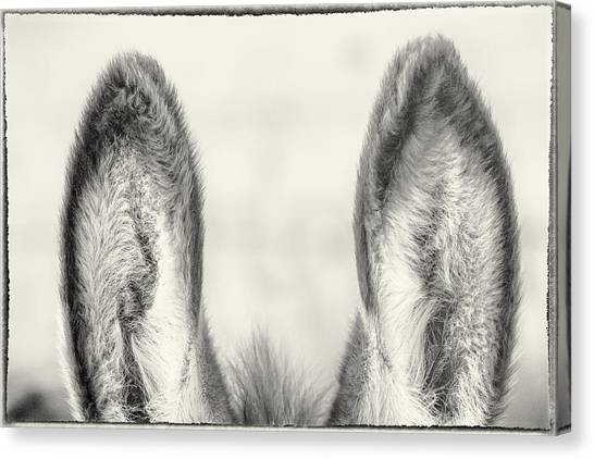 Those Ears Canvas Print