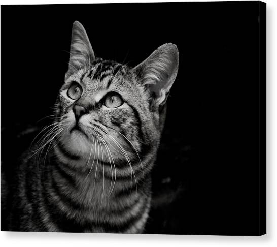 Canvas Print featuring the photograph Thoughtful Tabby by Chriss Pagani