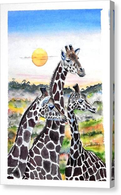 Three Giraffes    Sold Canvas Print