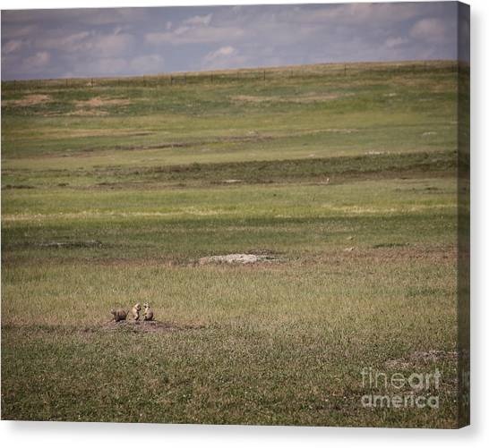 Canvas Print featuring the photograph Three Amigos by Sandy Adams