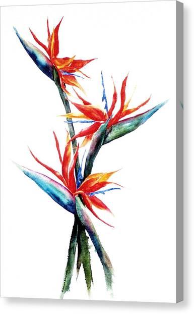 Three Birds Canvas Print by Suzanne Krueger