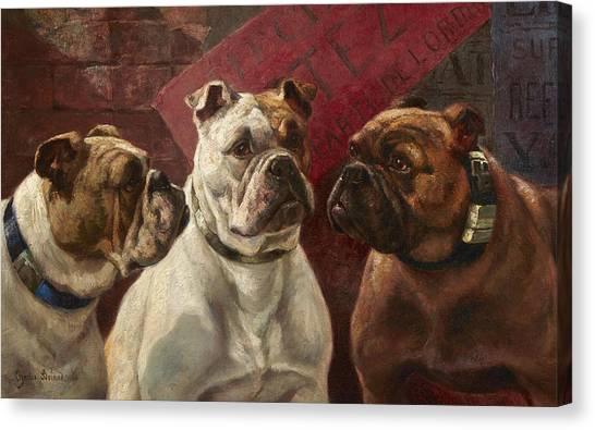 Purebred Canvas Print - Three Bulldogs by Charles Boland