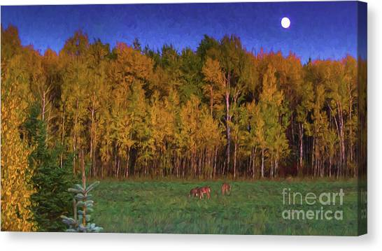 Three Deer And A Moon Canvas Print