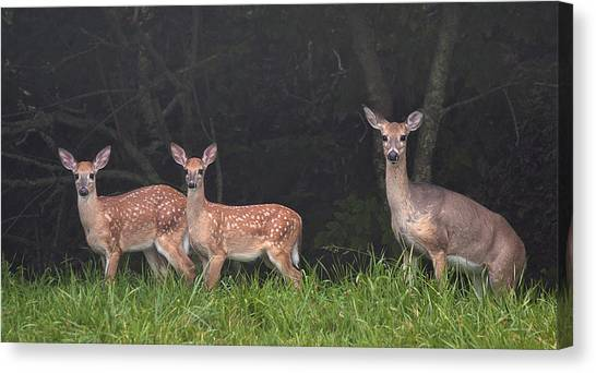 Three Does Canvas Print