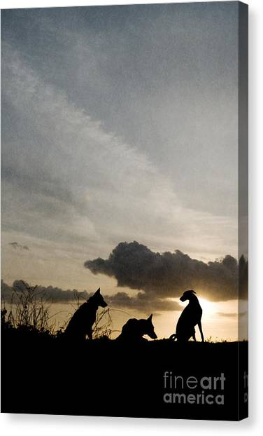 Three Dogs At Sunset Canvas Print