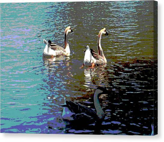 Three Geese Swimming Canvas Print by Diann Baggett