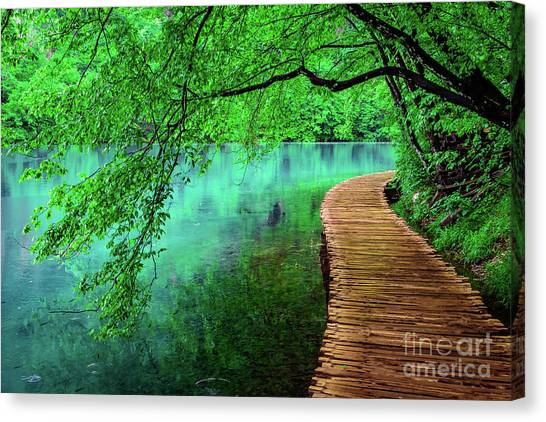 Tree Hanging Over Turquoise Lakes, Plitvice Lakes National Park, Croatia Canvas Print